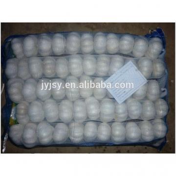 fresh garlic in 10kg carton pure white or normal white