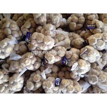 fresh garlic nature garlic