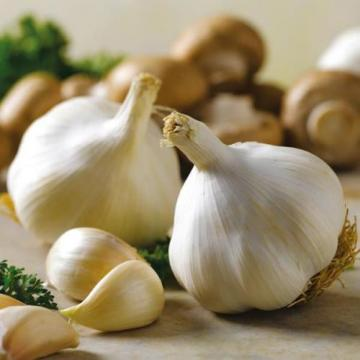 Garlic winter Lyubasha Vegetable Seed from Ukraine