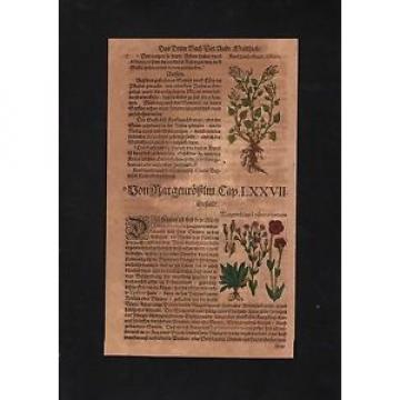1580 - Knoblauch Garlic Lichtnelke herbs Herbal Kräuter Kräuterbuch Mattioli