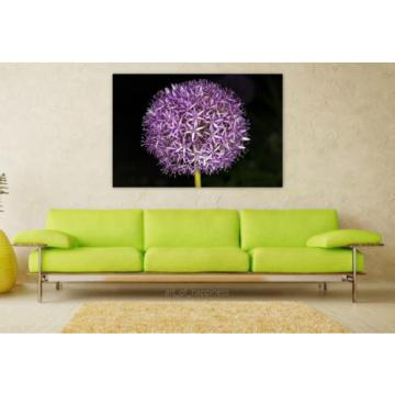 Stunning Poster Wall Art Decor Flower Blossom Bloom Garlic Macro 36x24 Inches