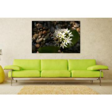 Stunning Poster Wall Art Decor Bear S Garlic Herbs Bloom Flowers 36x24 Inches