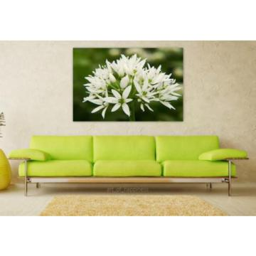 Stunning Poster Wall Art Decor Bear S Garlic Blossom Bloom White 36x24 Inches