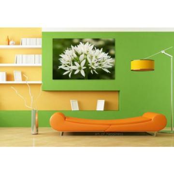 Stunning Poster Wall Art Decor Bear S Garlic Blossom Bloom White 36x24 Inches
