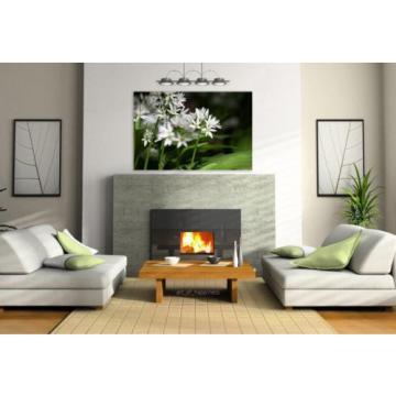 Stunning Poster Wall Art Decor Bear S Garlic Allium Ursinum 36x24 Inches