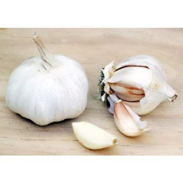 Garlic Oil - GARLIC ODORLESS 400MG - Keep Your Blood Sugar Levels In Check 6B