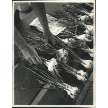 1988 Press Photo Onions and Garlic were Arranged by Gloria Lundt of Germantown