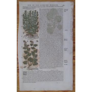 MATTIOLI: Folio Leaf Handcolored Woodcut Coltsfoot Garlic * - 1572