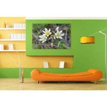 Stunning Poster Wall Art Decor False Garlic Crow Poison Flowers 36x24 Inches