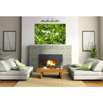 Stunning Poster Wall Art Decor Bear S Garlic Blossom Bloom Bloom 36x24 Inches