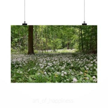 Stunning Poster Wall Art Decor Bear S Garlic Forest Spring 36x24 Inches