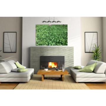 Stunning Poster Wall Art Decor Bear S Garlic Vegetables Delicacy 36x24 Inches