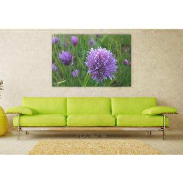 Stunning Poster Wall Art Decor Purple Flower Wild Garlic Flowers 36x24 Inches