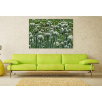 Stunning Poster Wall Art Decor Green Plant Nature Flower Garlic 36x24 Inches