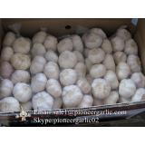Best Quality 5.0cm Normal White Garlic Packed According to client's requirements