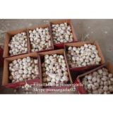 Chinese Fresh Red Garlic (Allium Sativum) Packed In Mesh Bag