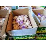 Jinxiang Fresh Red Garlic 5.5cm Loose Packing In Carton Box