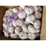 Loose Packing 5.5-6cm Fresh Red Garlic Produced In Jinxiang Shandong China