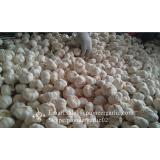 New Crop Chinese 5cm Snow White Fresh Garlic Small Packing In Mesh Bag