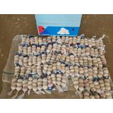 Chinese Natural Garlic Purple Garlic Exported to Costa Rica