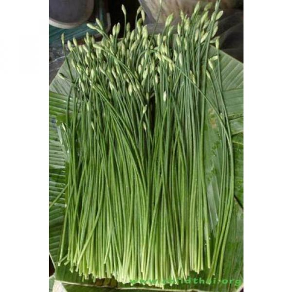 300 Seeds Garlic chives Leek Chinese Chives Oriental Garlic + Delivery #1 image