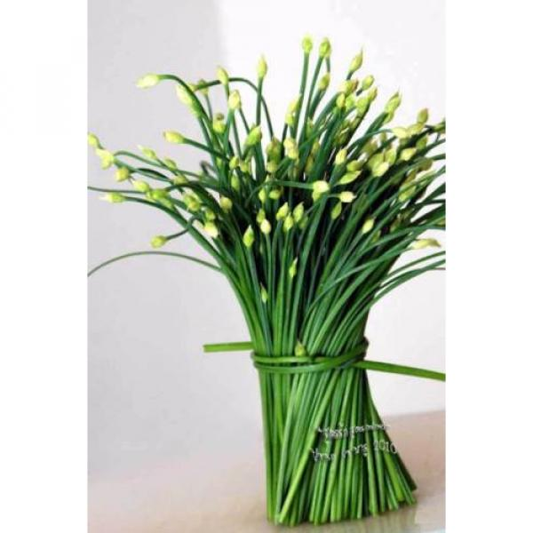 300 Seeds Garlic chives Leek Chinese Chives Oriental Garlic + Delivery #2 image