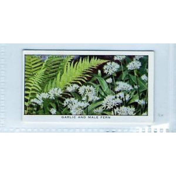 #15 Garlic and Male Fern - Life In A Hedgerow Card #1 image