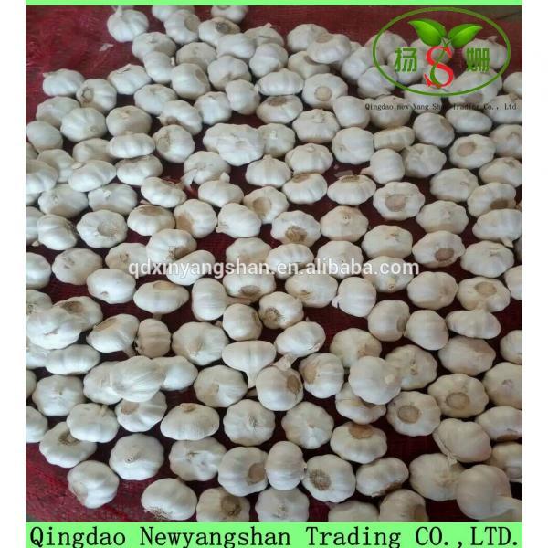 Hot 2017 year china new crop garlic Sale  Chinese  White  Fresh  Spicy Garlic #1 image