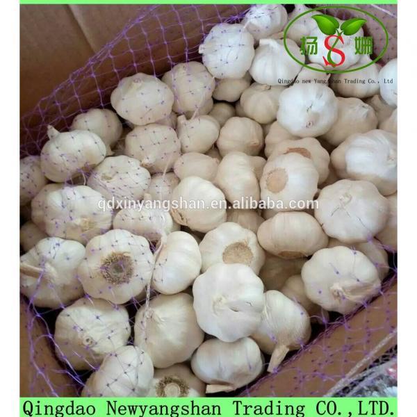 Hot 2017 year china new crop garlic Sale  Chinese  White  Fresh  Spicy Garlic #2 image