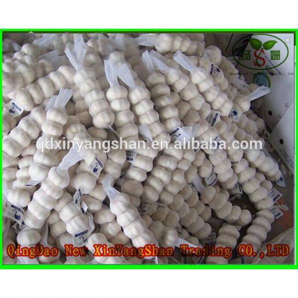 Hot 2017 year china new crop garlic Sale  Chinese  White  Fresh  Spicy Garlic #4 image