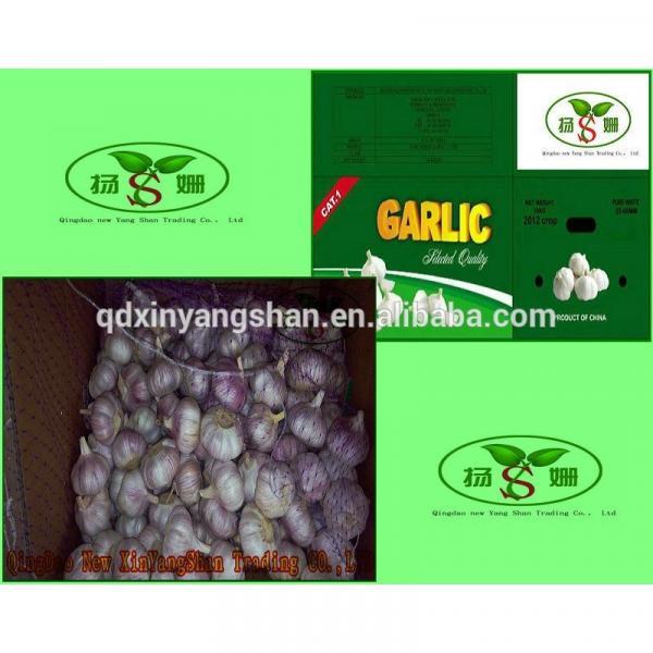 (HOT) 2017 year china new crop garlic Purple  garlic  exporters   #1 image