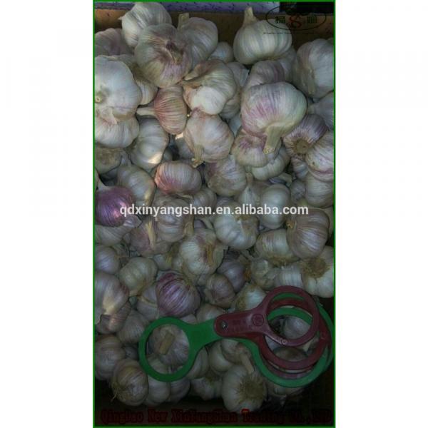 (HOT) 2017 year china new crop garlic Purple  garlic  exporters   #2 image