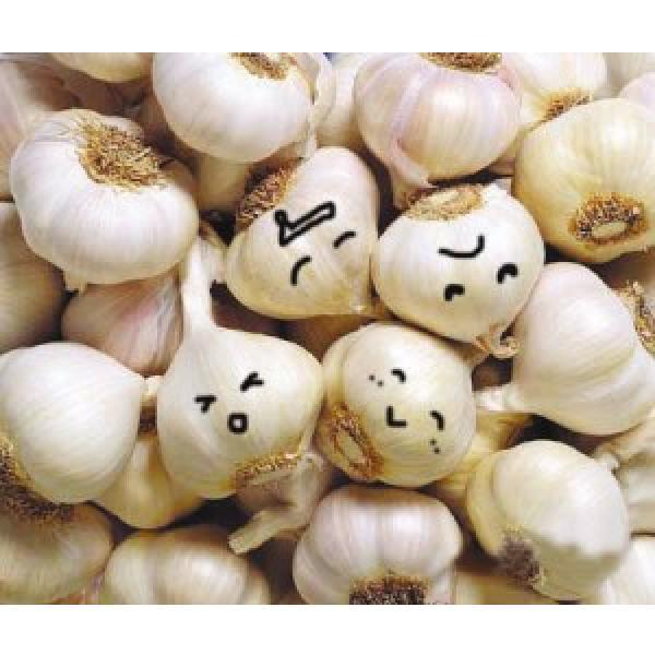 Hot 2017 year china new crop garlic sale  fresh  Chinese  normal  white garlic price #4 image