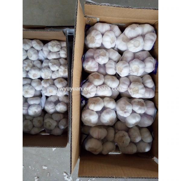 YUYUAN 2017 year china new crop garlic brand  hot  sail  fresh  garlic garlic mesh bag #4 image