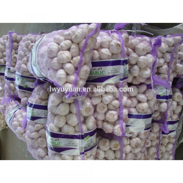 YUYUAN 2017 year china new crop garlic brand  hot  sail  fresh  garlic garlic mesh bag #1 image