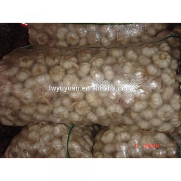 YUYUAN 2017 year china new crop garlic brand  hot  sail  fresh  garlic garlic mesh bag #5 image