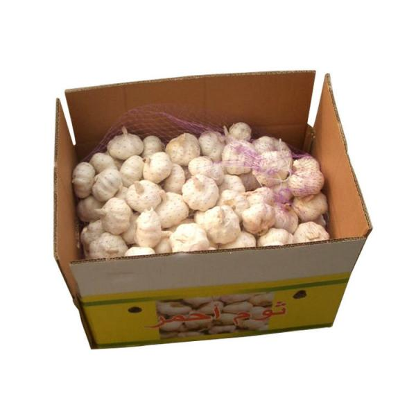 New 2017 year china new crop garlic product  purity  natural  garlic  in brine supplier with competitive price #4 image