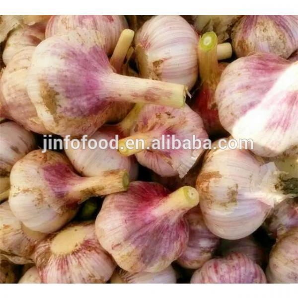 2017 2017 year china new crop garlic new  crop  garlic   #1 image