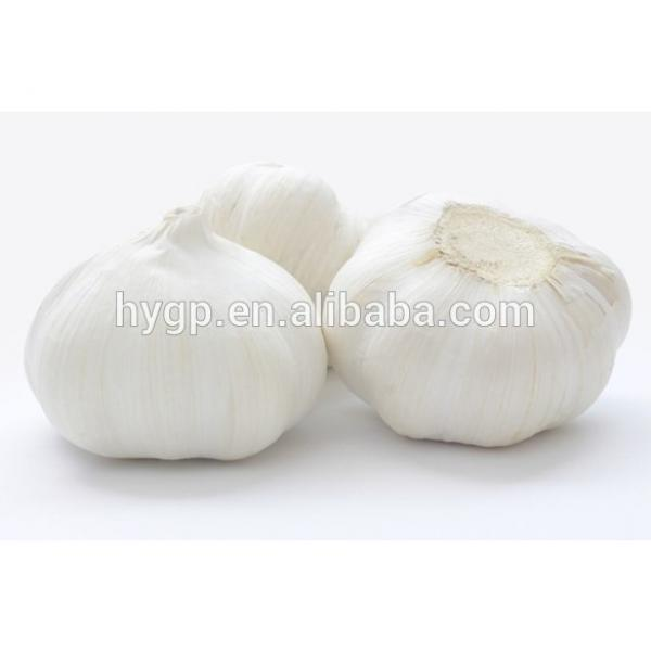 2017 Fresh China Garlic #1 image
