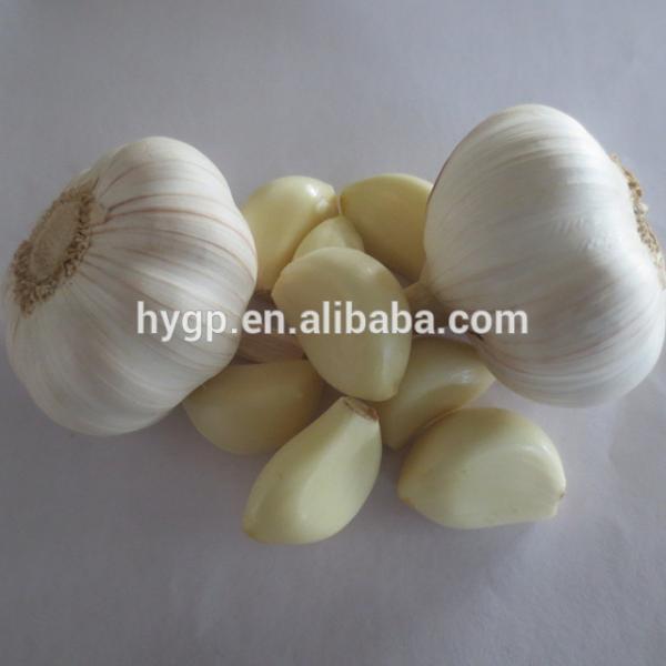 2017 Fresh China Garlic #2 image