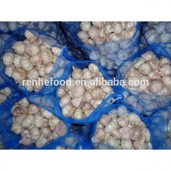 Best Quality and Cheap Price Fresh White Garlic #1 image