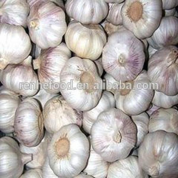 Best Quality and Cheap Price Fresh White Garlic #2 image