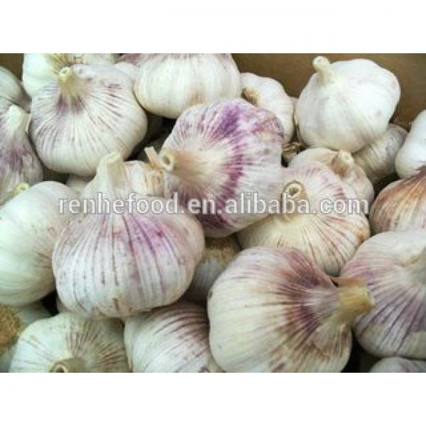 Best Quality and Cheap Price Fresh White Garlic #3 image