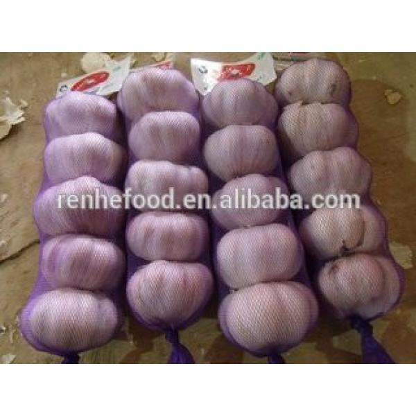 Best Quality and Cheap Price Fresh White Garlic #4 image