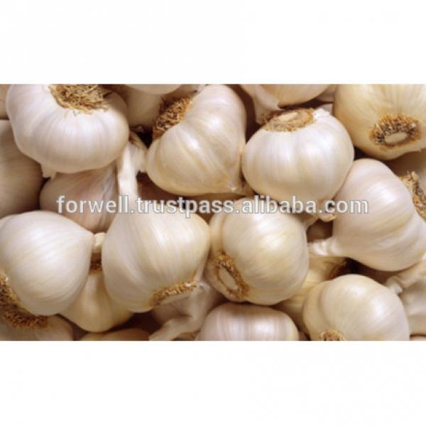 price special garlic ...best quality garlic...red white garlic #2 image