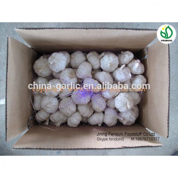 chinese natural garlic on sale garlic benifit for health fresh garlic #2 image