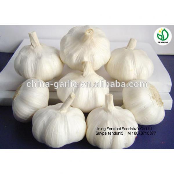chinese natural garlic on sale garlic benifit for health fresh garlic #3 image