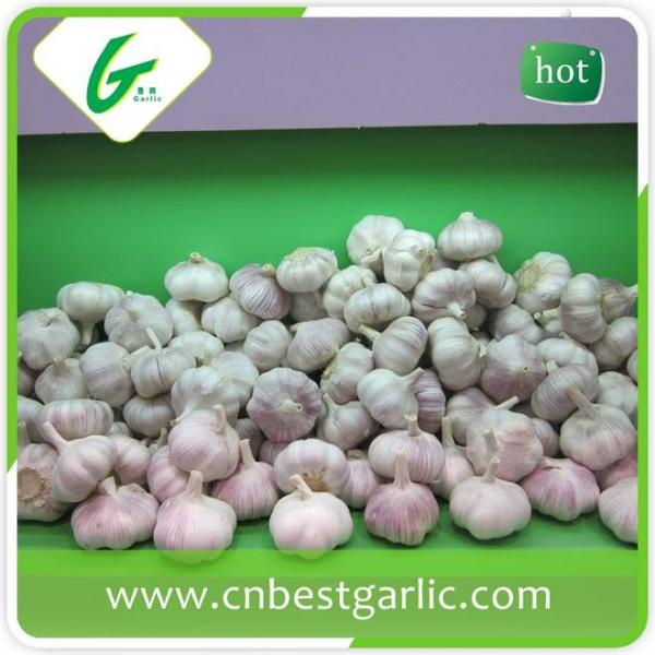Fresh china cheap professional garlic exporter in small pack price #2 image