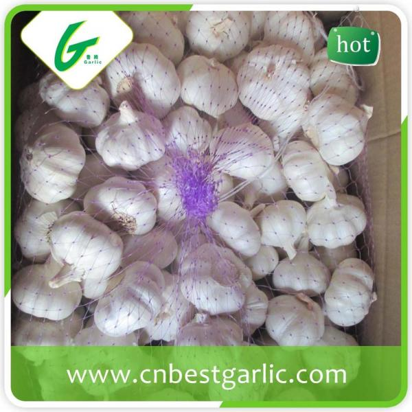 Fresh china cheap professional garlic exporter in small pack price #3 image