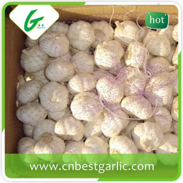 Fresh china cheap professional garlic exporter in small pack price #4 image